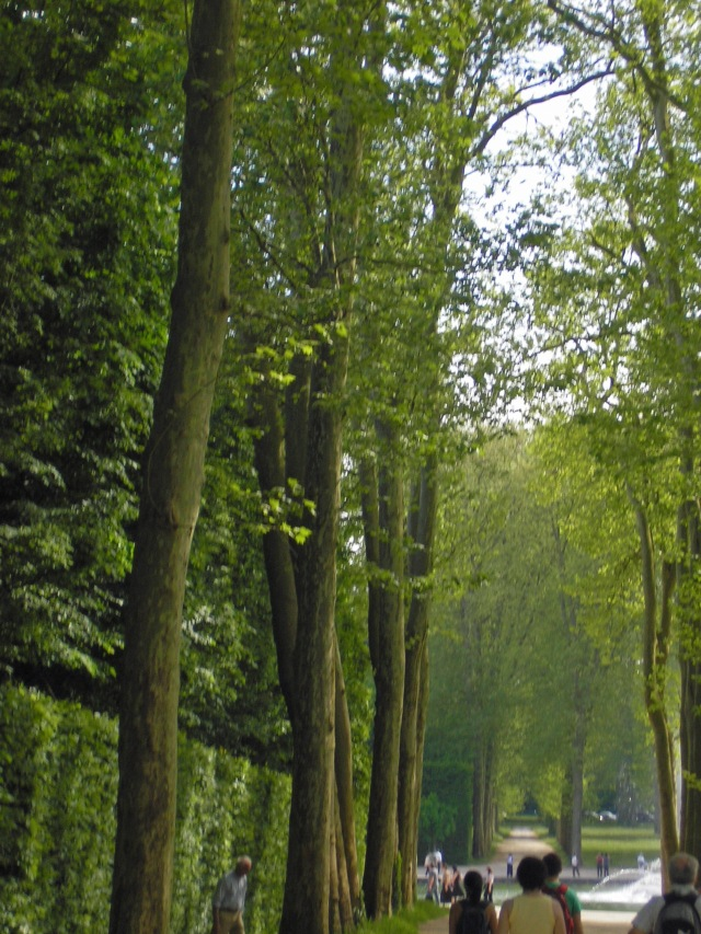 The Woods between Versailles and Petit Trianon