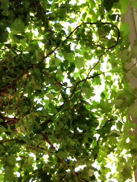 The Arbor at our Favorite Restaurant