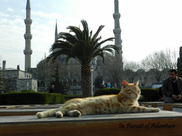 One of the several kittens that wander the capitol-this one is taking in the sun in front of the Blue Mosque