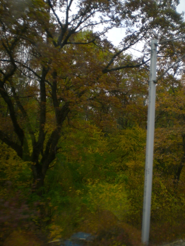 Fall in Romania from the Train