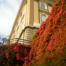 Beautiful Fall Leaves at Budapest Castle