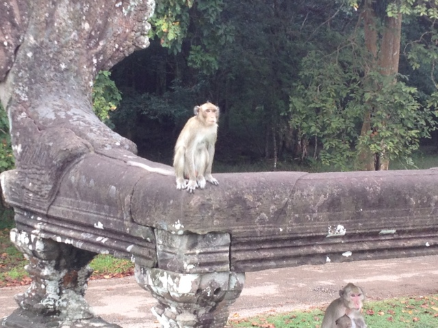 The monkeys came around just as we were about to leave Angkor Wat and as I was obsessed with seeing monkeys during the trip we had to sneak a few pictures of them