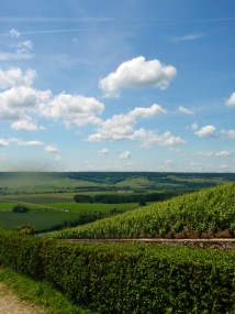 The hills of Champagne, look at all that potential champagne!