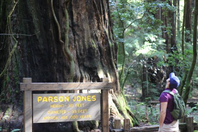 Alex in the Redwoods next to Parson Jones one of the oldest trees in Armstrong Woods