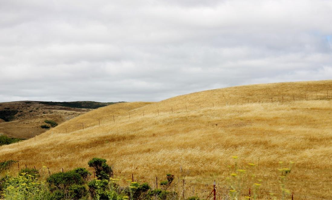 California's Golden Hills