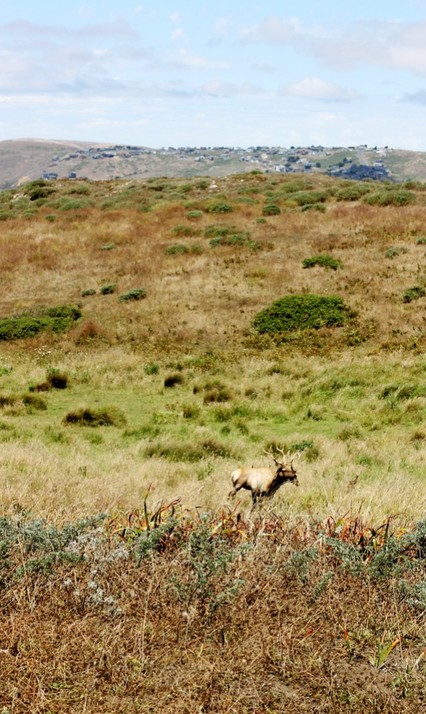 We finally spotted the infamous elk!