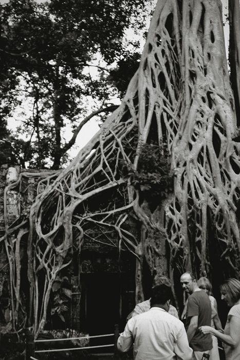 Ta Phrom was what I had always envisioned the ruins to be; run down, crumbling, perhaps the home of the lost idol :)