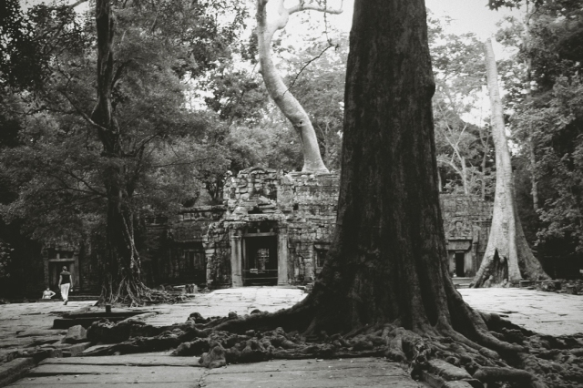 The entrance to Ta Prohm and the last site we saw of the spectacular ruins of Angkor Wat